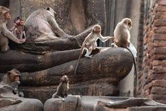 Die Affen spielen und leben im Ruinentempel Lizenzfreie Stockbilder