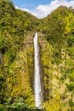 Die Akaka-Fälle, Hawaii Lizenzfreie Stockbilder