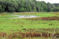 Die Alachua-Wanne auf der La Chula-Spur in Paynes-Grasland Florida Lizenzfreies Stockbild