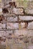 Die alte Backsteinmauer bedeckt mit einem Moos Lizenzfreie Stockfotos