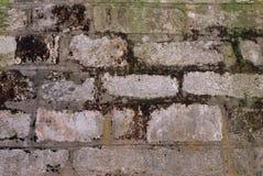 Die alte Backsteinmauer bedeckt mit einem Moos Lizenzfreies Stockbild