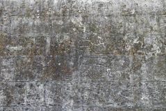 Die alte Backsteinmauer bedeckt mit einem Moos Stockbild