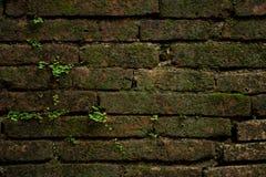 Die alte Backsteinmauer mit Betriebshintergrund Lizenzfreie Stockbilder