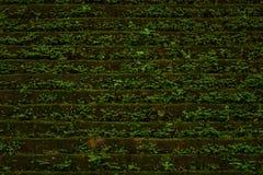 Die alte Backsteinmauer mit Betriebshintergrund Lizenzfreie Stockfotos