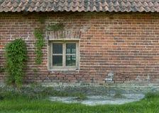 Die alte Backsteinmauer mit einem Fenster und wilden Trauben Lizenzfreie Stockbilder