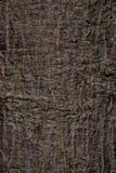 Die alte Barke der Baumbeschaffenheit Lizenzfreies Stockfoto