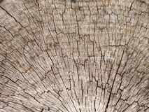 Die alte Barkenbeschaffenheit in der Nahaufnahme Lizenzfreie Stockfotos