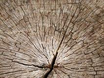 Die alte Barkenbeschaffenheit in der Nahaufnahme Lizenzfreie Stockbilder