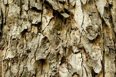 Die alte Baumrinde Stockfotografie