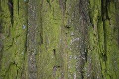 Die alte Baumrinde hintergründe Lizenzfreie Stockfotografie