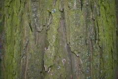 Die alte Baumrinde hintergründe Lizenzfreies Stockbild