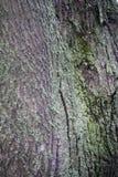 Die alte Baumrinde hintergründe Stockfotos