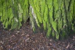 Die alte Baumrinde hintergründe Stockbilder
