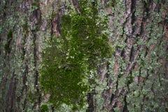 Die alte Baumrinde hintergründe Stockbild