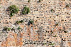Die alte beige steinige Wand des Hintergrundes mit Anlagen Lizenzfreie Stockfotos
