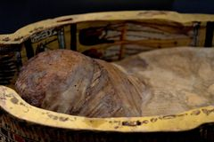 Die alte einbalsamierte ägyptische Mama Stockfotos