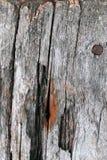 Die alte hölzerne Beschaffenheit mit natürlichen Mustern Innerhalb des Baumhintergrundes Alte grungy und verwitterte graue hölzer Lizenzfreies Stockfoto