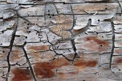Die alte hölzerne Beschaffenheit mit natürlichen Mustern Innerhalb des Baumhintergrundes Alte grungy und verwitterte graue hölzer Stockfotografie