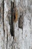 Die alte hölzerne Beschaffenheit mit natürlichen Mustern Innerhalb des Baumhintergrundes Alte grungy und verwitterte graue hölzer Stockbilder
