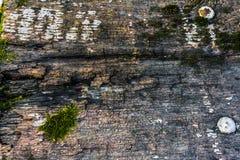 Die alte hölzerne Beschaffenheit mit natürlichen Mustern und Sprüngen auf der Oberfläche als Hintergrund Verdunkeln Sie sich von  Lizenzfreies Stockbild