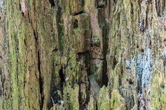 Die alte hölzerne Beschaffenheit oder der Hintergrund Der Makroschuß des faulen Baumstumpfs AA Stockfotos