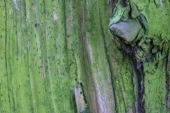 Die alte hölzerne Beschaffenheit oder der Hintergrund Der Makroschuß von ein fauler Baumstumpf Lizenzfreie Stockfotografie