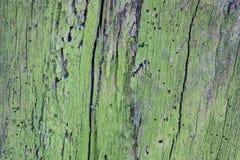 Die alte hölzerne Beschaffenheit oder der Hintergrund Der Makroschuß von ein fauler Baumstumpf Lizenzfreies Stockfoto