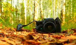 Die alte Kamera im Wald Lizenzfreies Stockfoto