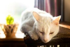 Die alte Katze aalt sich in der Sonne Vor dem hintergrund des Fensters Es gibt eine Blume auf dem Fenster Die Lichter einer Sonne lizenzfreie stockfotografie