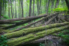 Die alte ruinierte Brücke von Verrottung meldet den Wald an Lizenzfreie Stockbilder