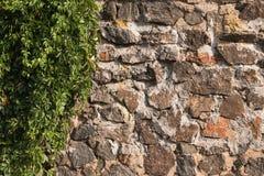Die alte Wand, die vom Kopfstein und von den Trauben hergestellt wurde, beleuchtete durch die Morgensonne Lizenzfreie Stockfotos