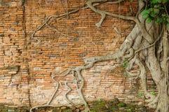 Die alten Backsteinmauer- und Baumwurzeln Lizenzfreies Stockbild