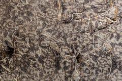 Die alten getragenen Bretter der Beschaffenheit die gebrochene Farbe, Stockbilder