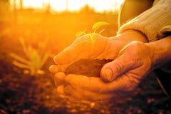 Die alten ländlichen Hände, die grüne Jungpflanze strahlt halten im Sonnenlicht aus Stockbild