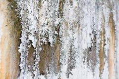 Die alten weißen Wände und der Pilz mit verschiedenen Schatten Stockbild
