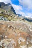 Die alten Zeichnungen auf Felsen Altai Lizenzfreie Stockfotos