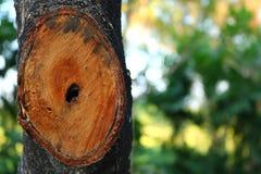 Die Ameise in der Höhle eines Baums Lizenzfreies Stockbild