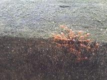 Die Ameise essen Ameise Stockfotos