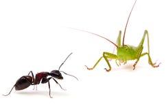 Die Ameise und die Heuschrecke Stockfoto