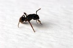 Die Ameisen Lizenzfreies Stockbild