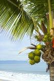 Die Ananas Lizenzfreies Stockfoto