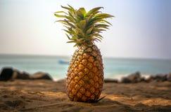 Die Ananas liegt auf dem Sand unter dem Schatten von Palmen auf dem Strand Lizenzfreie Stockbilder