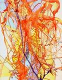 Die Anatomie von Lava stockbild