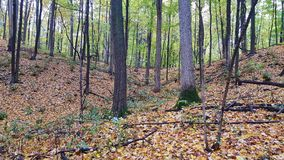 Die Ankunft des Herbstes Stockfotos