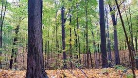 Die Ankunft des Herbstes Stockfoto