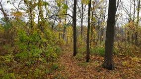 Die Ankunft des Herbstes Stockbilder