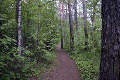 Die Anlage, die Weg draußen wandert, treiben Grasfußwegenkiefernblattherbstparksommerhinterhölzernes Frühlingsstraßen-Waldweg-Bau Lizenzfreies Stockbild