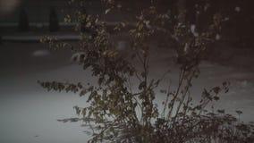 Die Anlage rüttelt im Wind Bush mit Blättern im Winter stock video footage