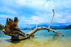 Die Anmeldung das Meer Stockfotografie