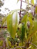 Die Anmut eines grünen Blattes Stockfotografie